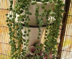 風除室の植物