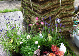 2010年春のお庭