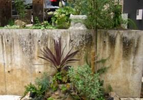 夏前の花壇