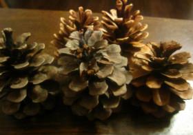 2011年クリスマスツリーと石巻