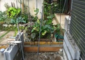 玄関アプローチ前の小庭19 手洗い場8