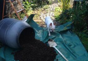 ハーブ菜園の最終形態なるか?2 ウンコ堆肥の結末