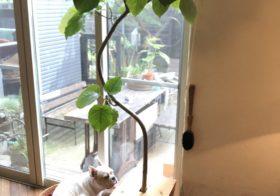 観葉植物の防御