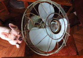 リビング 天井付け扇風機1